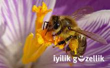 Arının mucize ürünleri nasıl kullanılır?